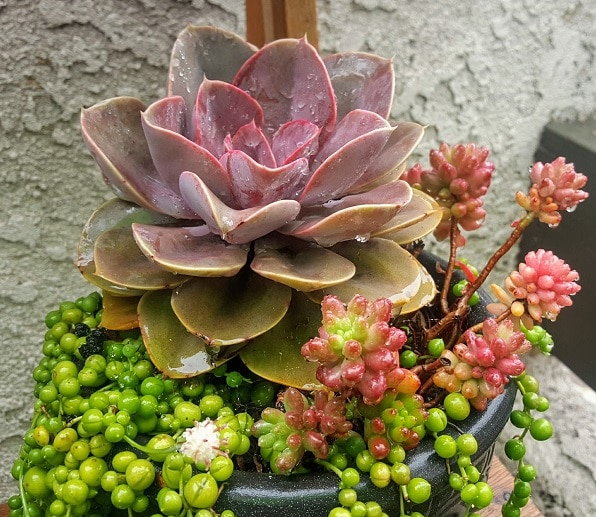 Featured Gardener from Orange County - Garden of Luma