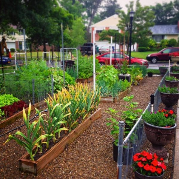 Should I Plant A Front Yard Vegetable Garden Garden Of Luma